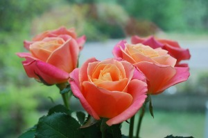 roses-2888589_1280
